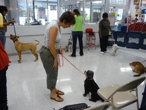 Puppy Training Miami